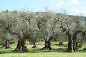 mediterranes Ayurveda