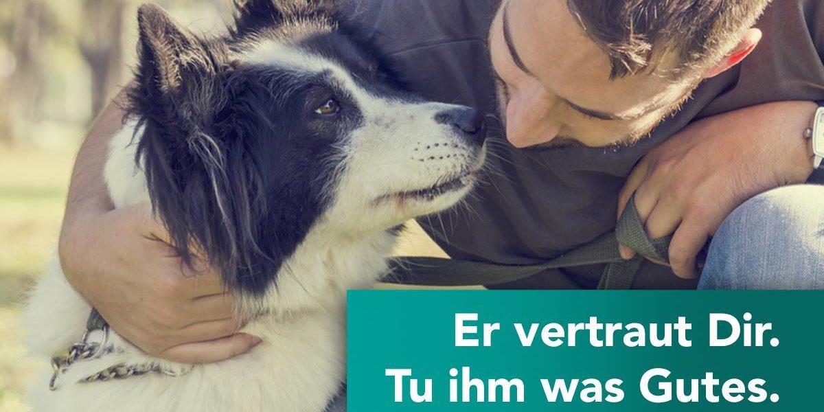 Zahnreinigung beim Hund