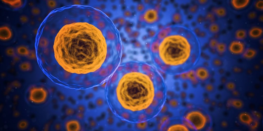Mitochondrien Dysbalance
