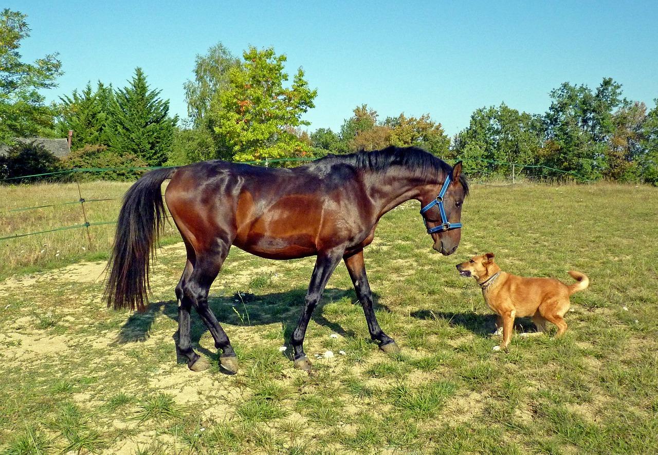 Vergiftung durch Pferdemist!